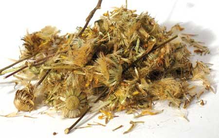 Azure Green HDAMLCB 1 Lb Damiana Leaf cut