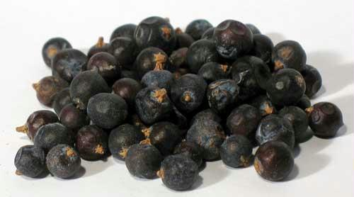 AzureGreen H16JUNW 1oz Juniper Berries Whole - Juniperus Communis