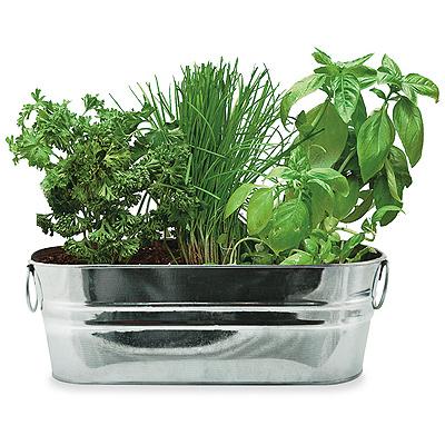 Buzzy 94330 Kitchen Herb Windowsill Grow Kit