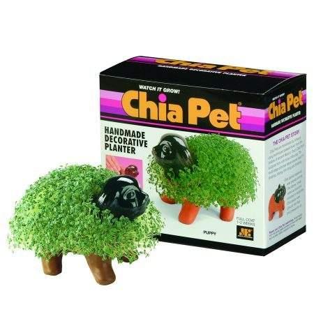 Chia Pet Decorative Planter Kit Puppy - 1 ea