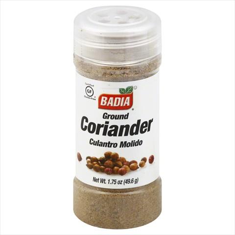 Coriander Ground -Pack of 12