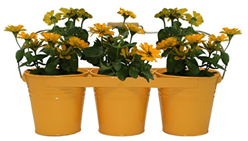 Houston International Trading 8333E SAFF Enameled Galvanized Triple Planter with Wood Handle for 6.5 Pots Saffron