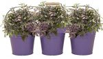 Houston International Trading 8333E V Enameled Galvanized Triple Planter with Wood Handle for 6.5 in. Pots Violet