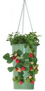 Houston International Trading 8395E AG Enameled Galvanized Hanging Strawberry Floral Planter - AppleGreen