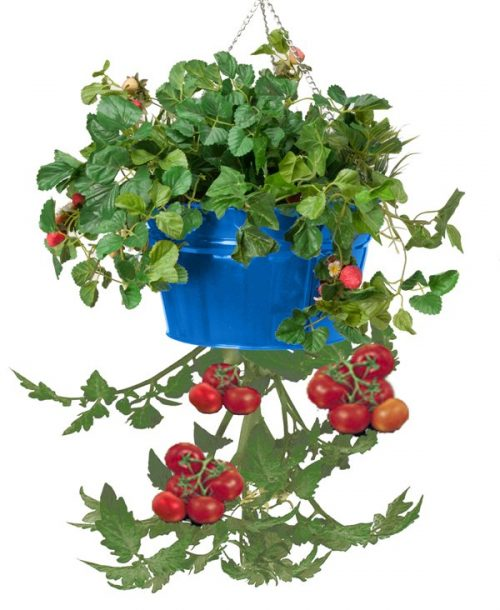 Houston International Trading 8399E B Enameled Galvanized Hanging Strawberry Floral Planter - Blue