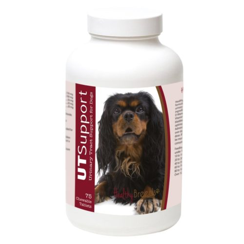 840235185802 English Springer Spaniel Cranberry Chewables, 75 Count