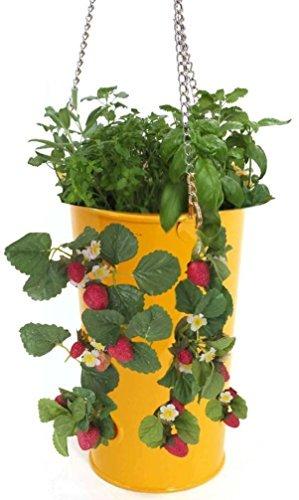 Enameled Galvanized Hanging Strawberry, Floral Planter - Saffron