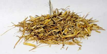 H16WITGC 1oz Witches Grass Cut - Agropyron Repens