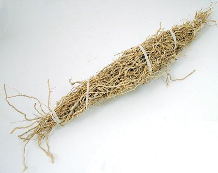 HPATR Patchouli Root 1 Root Bundle - Pogostemon Cablin