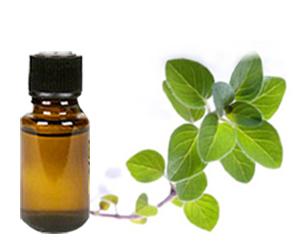 Healthy Alternatives 19A7300 Oregano Essential Oil