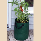 K715 Tomato Planter Bags- Green
