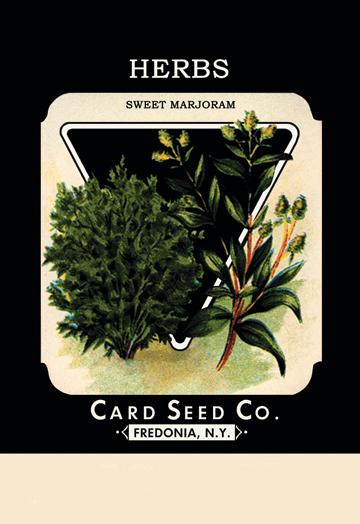 Buy Enlarge 0-587-02589-1P12x18 Herbs- Sweet Marjoram- Paper Size P12x18