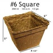 #6 Square Pot - 20 pots
